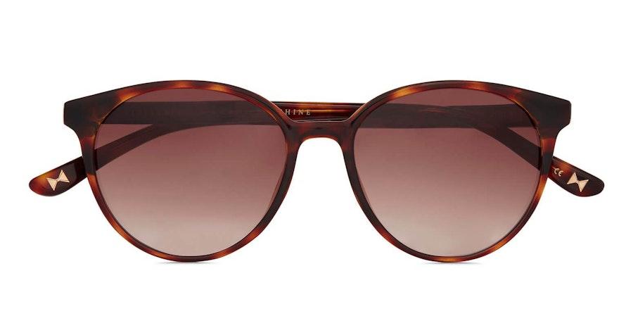 Ted Baker Flores TB 1604 (121) Sunglasses Brown / Havana