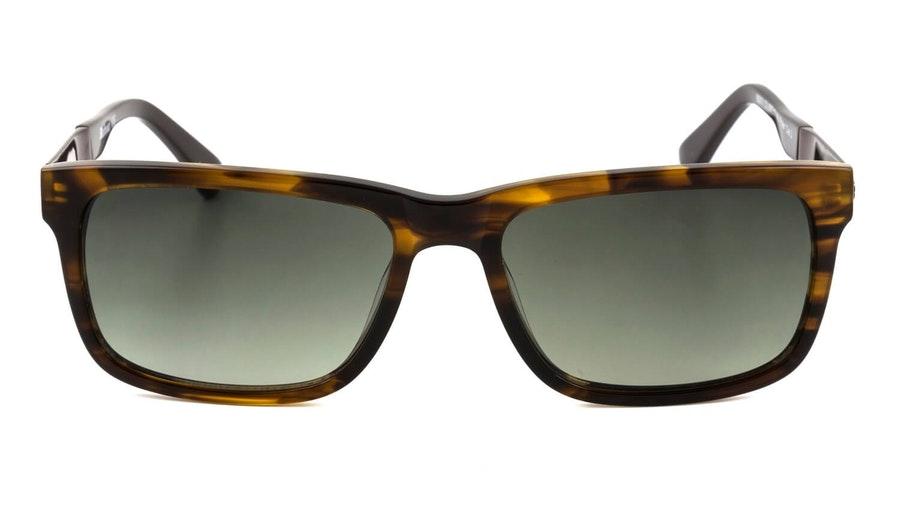 Barbour BS 071 (C1) Sunglasses Brown / Brown