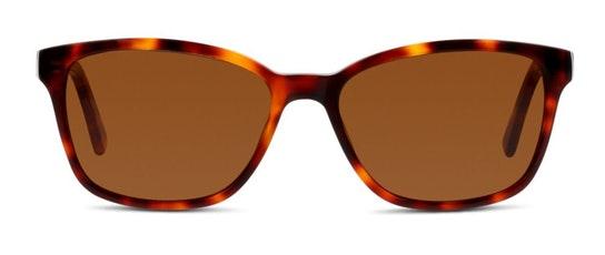 CN EF22 Unisex Sunglasses Brown / Tortoise Shell
