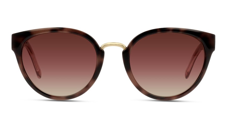 Burberry BE 4249 Women's Sunglasses Brown / Brown