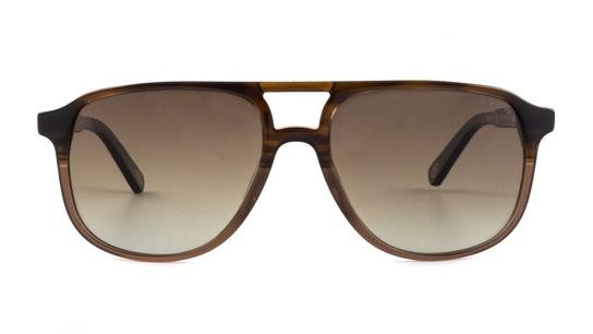 Fowey (BRN) Sunglasses Brown / Brown