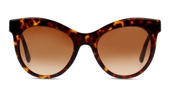 DG 4311 (502/13) Sunglasses Brown / Tortoise Shell