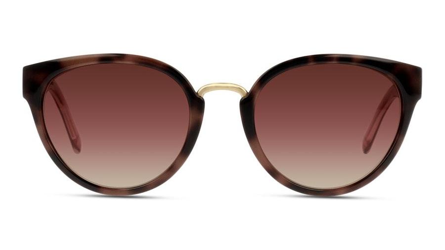 Burberry BE 4249 Women's Sunglasses Brown / Brown