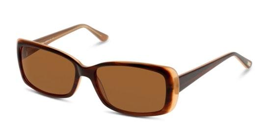 CN EF15 Women's Sunglasses Brown / Tortoise Shell