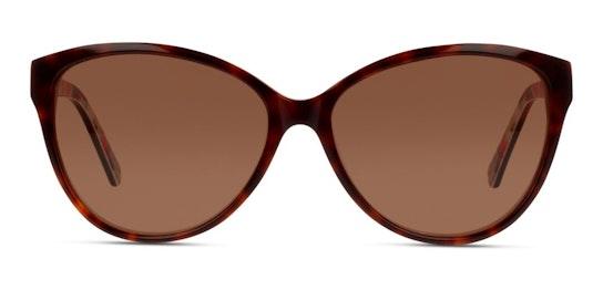 CN IF05 (HP) Sunglasses Brown / Brown